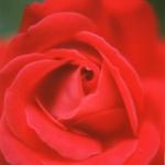 fiori-macro008